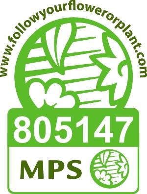 agricola-trapani-vignet-mps-abc-en-805147